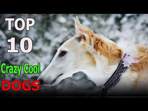 Top 10 Crazy cool dog breeds | Top 10 animals