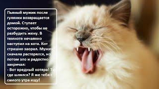 Анекдоты про котов  ч  2  Коты, кошки, котята  Домашние питомцы  Котэ Саратовский  Юмор