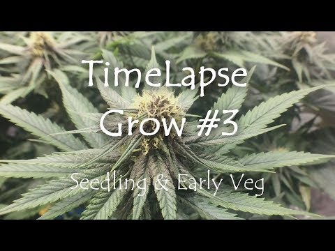 Time Lapse Grow #3 - Days 1-16 Seedling & Early Veg