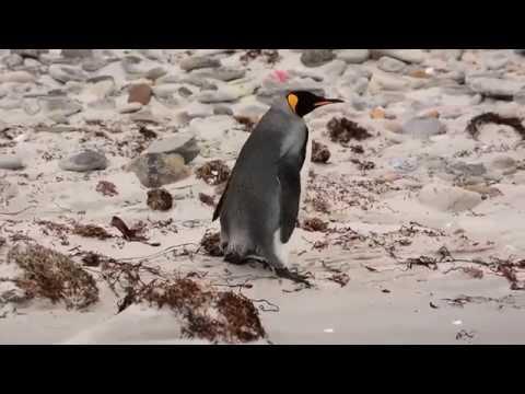 Falkland Islands SVA