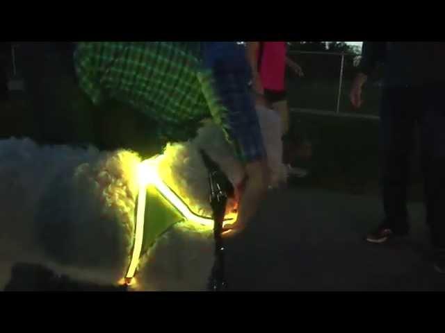 Spot360 Illuminated and Retroreflective Dog Vest by Noxgear