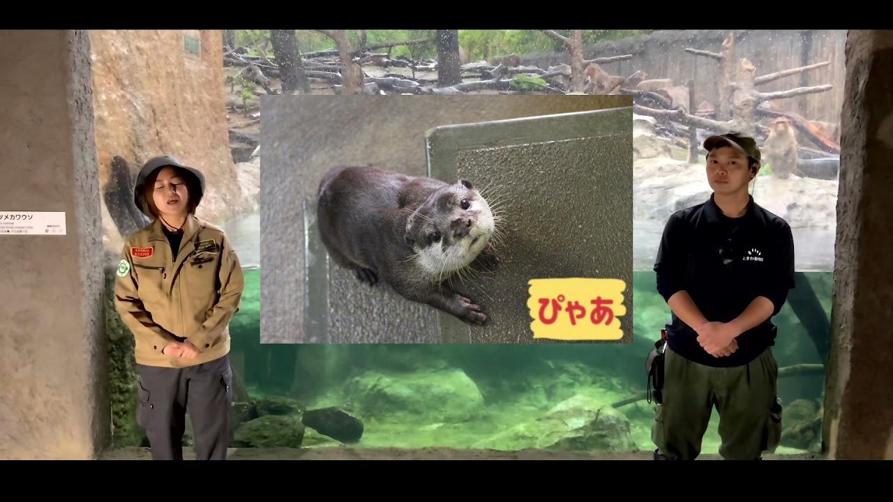 世界カワウソの日 徳山動物園×ときわ動物園 コラボガイド
