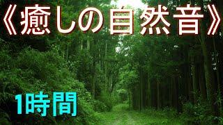 《癒しの自然音》ヒグラシの鳴き声(日暮れ時の森林)【安らぎ・睡眠・勉強】