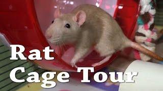 Rat Cage Tour