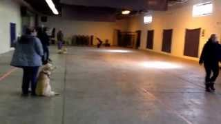 Basic Obedience Last Class Practicing Recall (come Command)