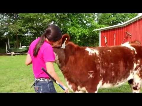 How To Prepare Your Livestock for Show Season