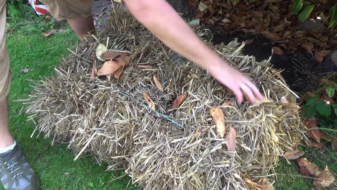 Braunkappenpilze anpflanzen der Zwischenstand Artikelbild