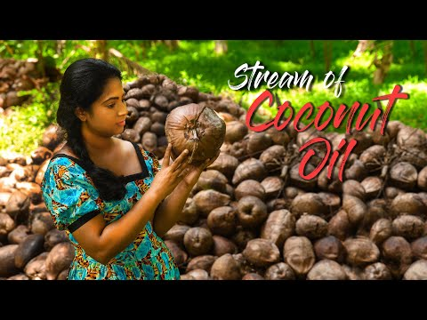 Making home-made coconut oil is not so easy as it taste!   Traditional Me