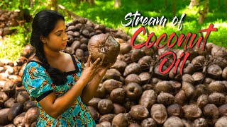 Making home-made coconut oil is not so easy as it taste! | Traditional Me