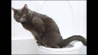 кошка приучена к лотку но гадит