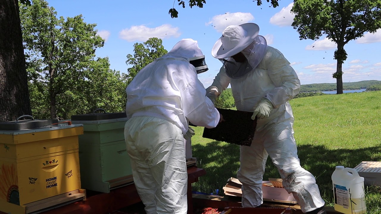 How To Install A Honey Bee Nucleus Colony - Installing A Nuc