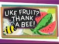 Like Fruit? Thank a Bee!