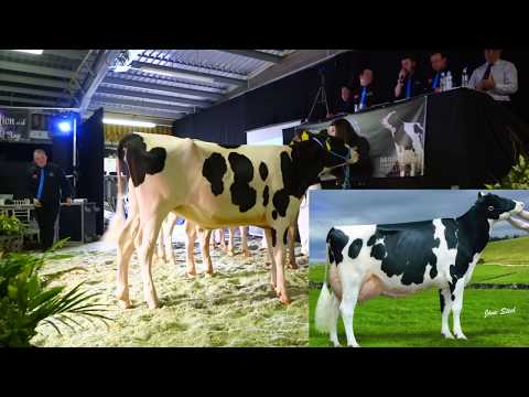 Peak Goldwyn Rhapsody EX97-1yr old Daughter sells at Perfection Collection