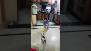 Dog home boarding video(5)