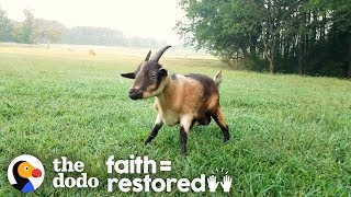 Goat Who Couldn't Walk Teaches Herself To Run | The Dodo Faith=Restored