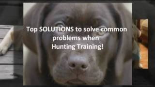 Most Wanted Training A Labrador Retriever For Hunting Tips