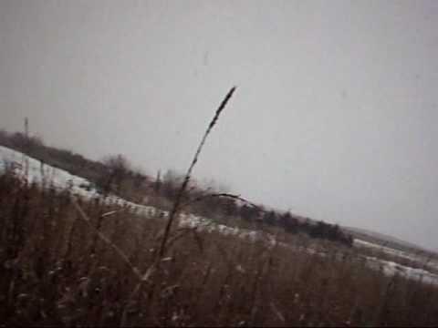 Pheasant Hunting, Miller, SD