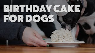 Birthday Cake for Dogs | Kiki's Canine Kitchen | Rover.com