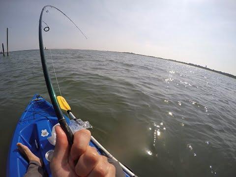 Saltwater slam! Fishing in Delaware 2017