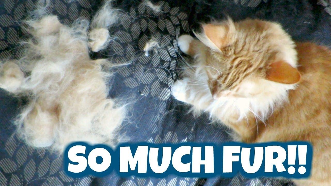 Furminator Cat Youtube