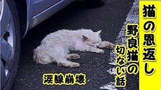 招き猫ちゃんねる・ チャンネル登録はこちら! https://www.youtube.com/channel/UCI4eutWmgqroPS8Xca7Rpsw?sub_confirmation=1 <関連動画> 招き猫 ...