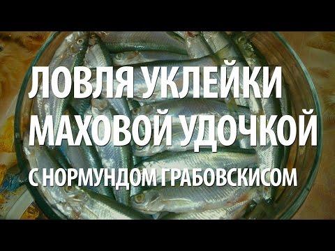 рыбалка с нормундом грабовскисом уклейка