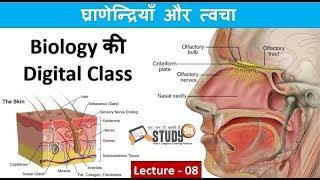 8.Skin|Granedriya|Twaza|Biology Classes| Science GK|Study91 |Nitin Sir