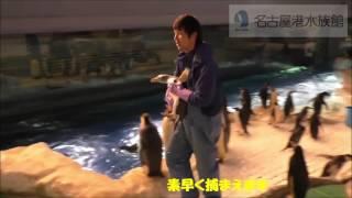 名古屋港水族館では9月からペンギンの繁殖期に入ります。 ペンギン水槽...