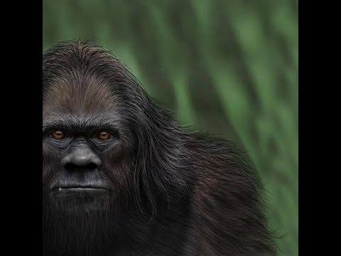 World Bigfoot Radio #29, Pt.1 ~ Troll origins and other tales/Khat
