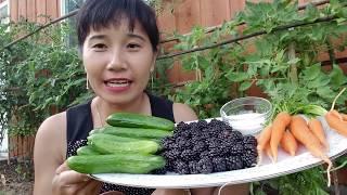 Thu hoạch cà rốt tý hon, dưa leo, mâm xôi đen, ăn tại vườn  ngon quá
