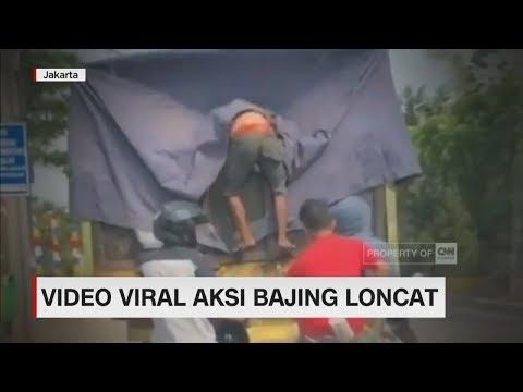 Video Viral Aksi Bajing Loncat