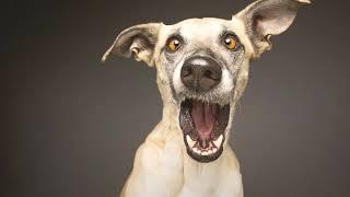 Нужно стричься! - клип на  смешную песню про собаку