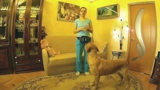 Дрессировка собак. Как научить собаку команде лежать