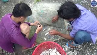 Vớt cá bị ngạt bùn ở bờ ruộng bỏ hoang/fishing