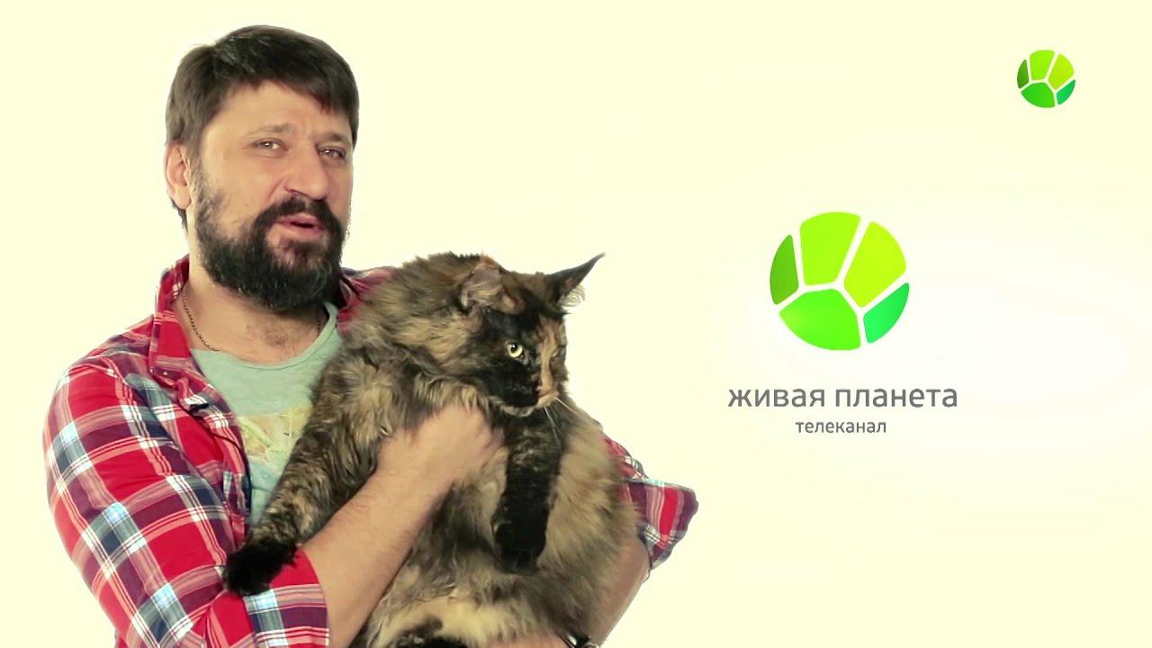 Логинов и котов