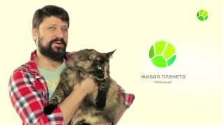Вктор Логинов и мейн-кун