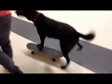 Tobi`s third time on a skateboard
