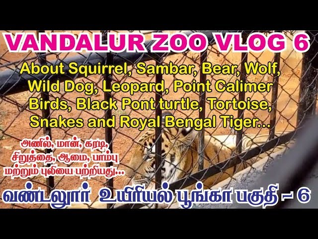 vandalur zoo vlog 6 | Arignar anna zoological park chennai