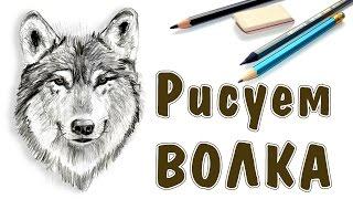 КАК НАРИСОВАТЬ ВОЛКА. How to draw a wolf(КАК НАРИСОВАТЬ ВОЛКА. How to draw a wolf Рисуем лесного хищника - волка. Для этого используем простые карандаши..., 2016-10-06T13:46:14.000Z)
