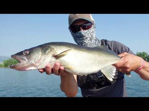 Big Standley Lake Walleye