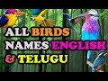All BIRDS NAMES ENGLISH AND TELUGU WITH VIDEOS AND VOICE