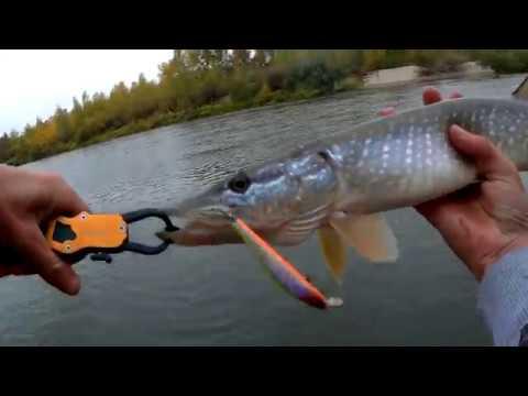 Осенняя рыбалка на Медведице