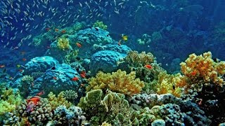 Обзор кораллового рифа через стеклянное дно лодки