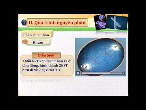Bai 18 Chu ki te bao va qua trinh nguyen phan GV Phan Thanh Huy  Phan 2