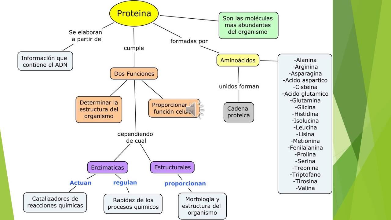 BIOMOLÉCULAS O MOLÉCULAS ORGÁNICAS