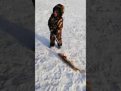 #рыбалка#Сургут#Лянтор#жерлицы#щука#на_живца🎣 отлично провели время с друзьями 👍