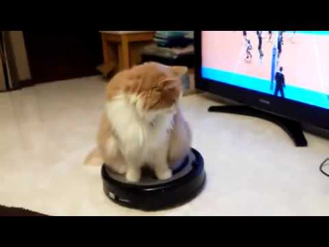 Cat Ridding Automatic Hoover Youtube