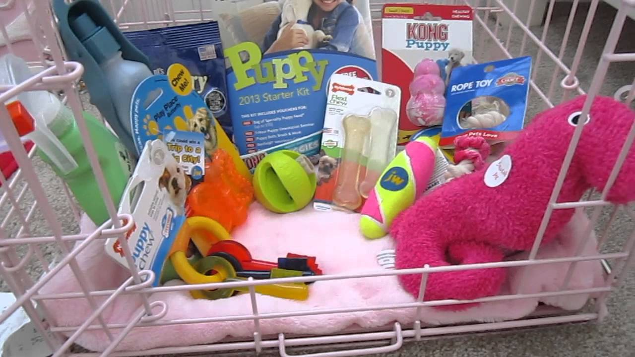 Supplies you need for a puppy  YouTube