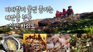 톳, 바위옷, 전복, 낙지. 해산물 천국 '하의도' [섬섬썸]