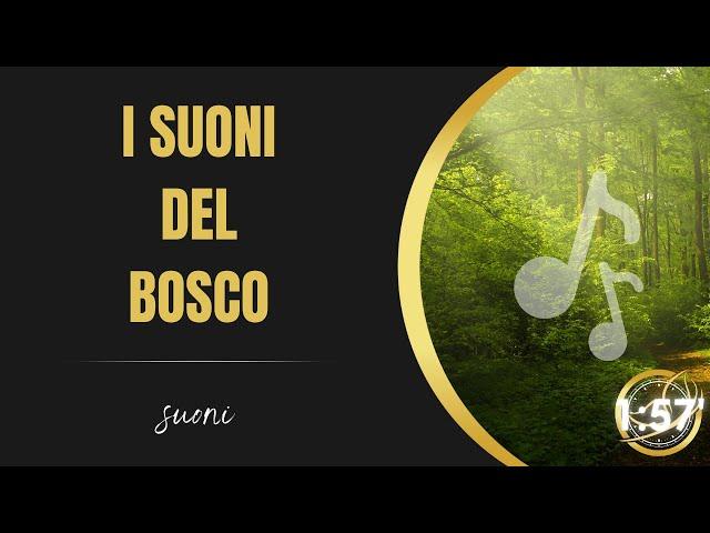 I suoni del bosco per rilassarti, meditare e liberarti dallo stress